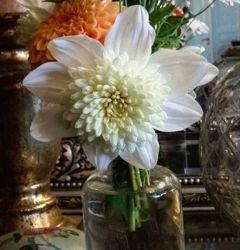 Anemone Dahlia Platinum blond. Denne har vi for salg i nettbutikken i år. https://www.syverudgaard.no/products/dahlia-anemone-platinum-blonde